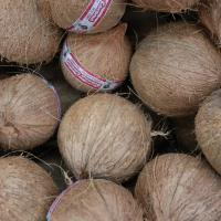Grocery Outlet coconuts